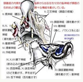 頭蓋底髄膜腫についての図-2